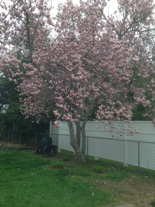 Magnolia 05.0.15