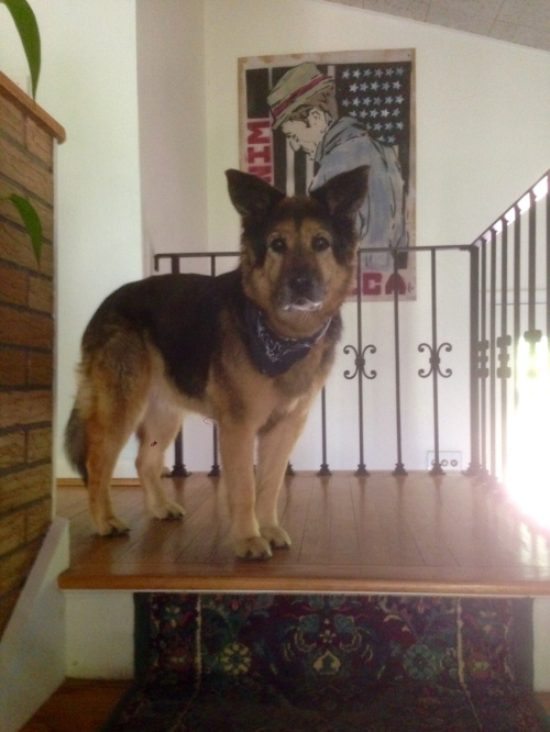 Frida on Stairs