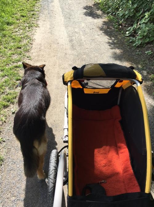 Frida walking 06.01.16